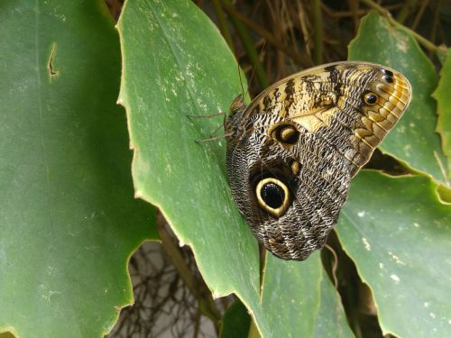 butterfly granada andalusia