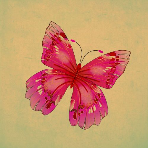 butterfly insect pink
