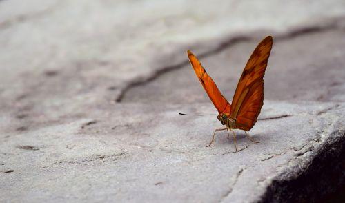 butterfly wing orange