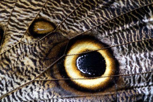 butterfly wing owl butterfly
