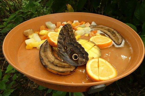 butterfly  zoo  blijdorp