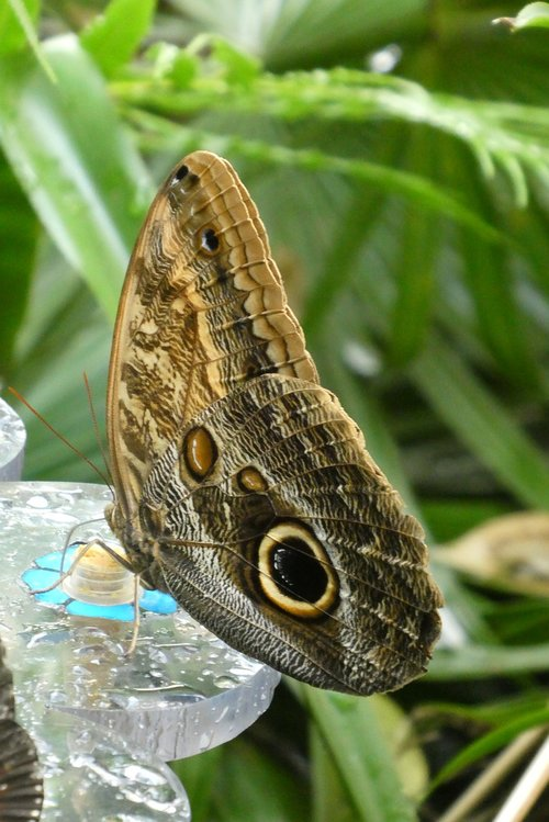 butterfly  butterfly garden  zoo
