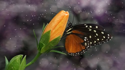 butterfly  nature  insect
