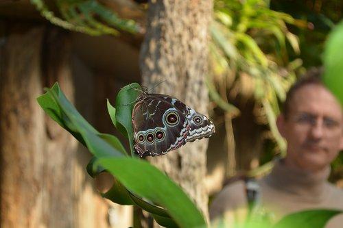 butterfly  botany  animal