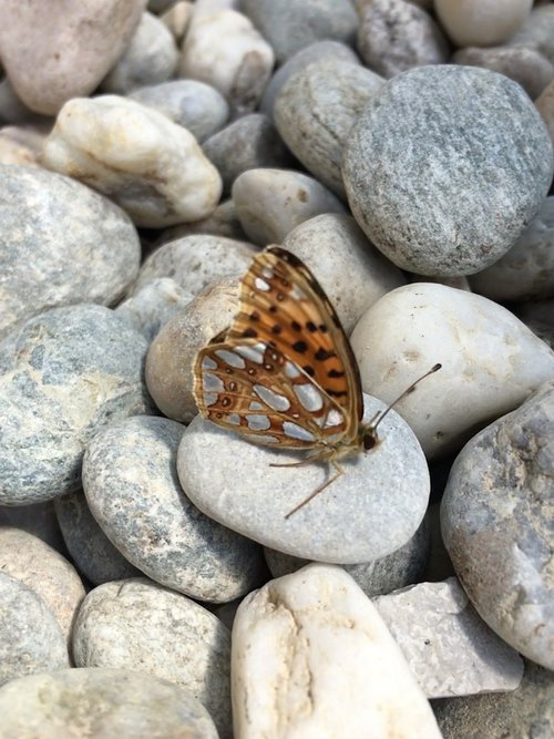 butterfly  stones  insect
