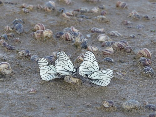 butterfly  white  sand