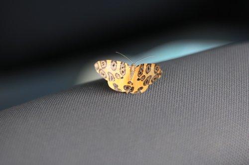 butterfly  mariposa  wings