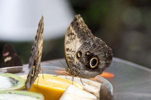 butterfly  luisenpark  macro