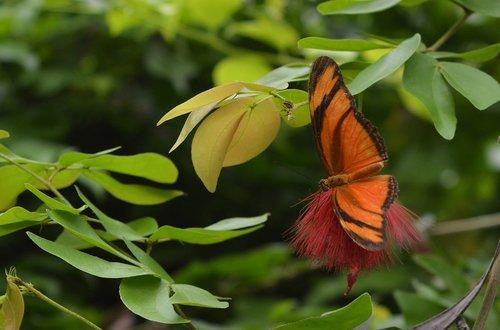 butterfly  torch  orange