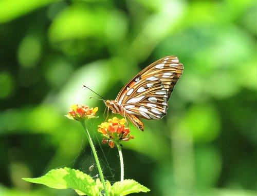 butterfly  flower  tropics