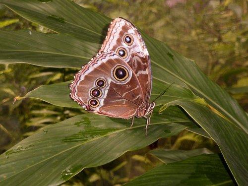 butterfly  aruba  nature