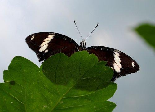 butterfly  butterflies  edelfalter
