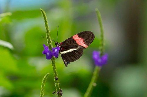 butterfly  fly  conservatory