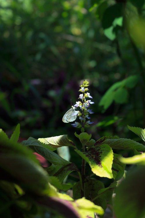 butterfly  flower  edelfalter