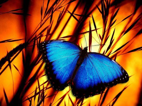 butterfly halme meadow