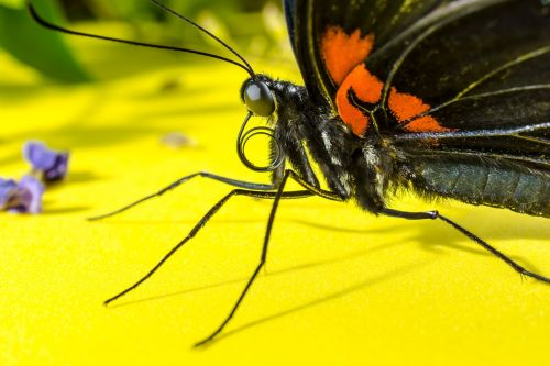 butterfly insect eyes