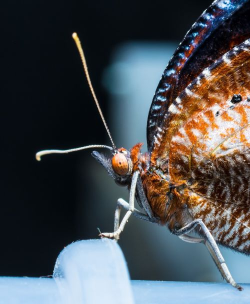 butterfly just hatched insect