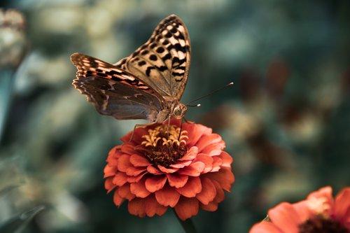 butterfly  antennae  wings