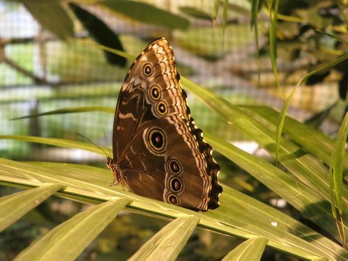 butterfly  animals  beauty