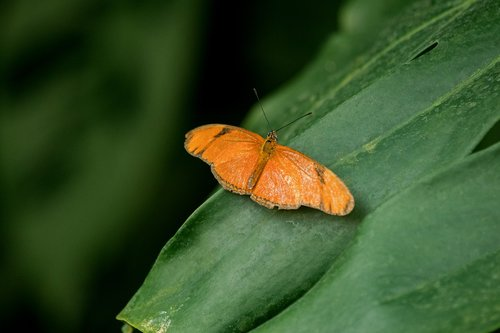 butterfly  insect  exotic