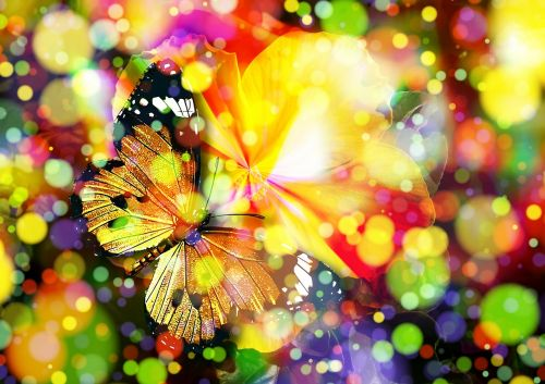 butterfly bokeh magic