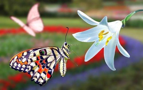butterfly  flower  spring