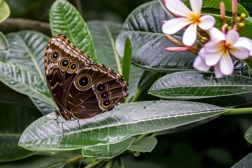 butterfly  nature  plant