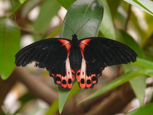 Sưu tập Bộ cánh vẩy 2 - Page 61 Butterfly-53016_1280