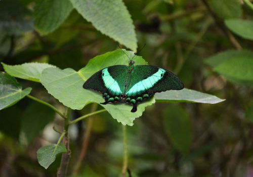 butterfly green nature