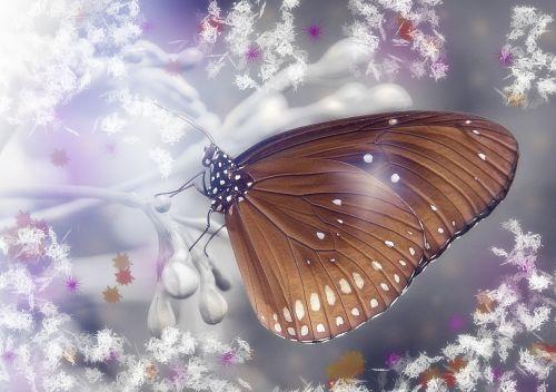 butterfly fantasy lichtspiel