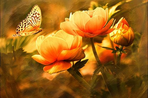 butterfly nature flowers