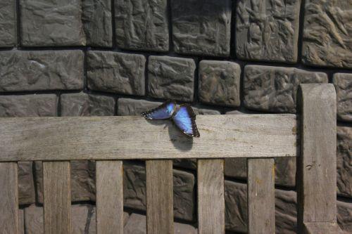 butterfly lake dusia wall
