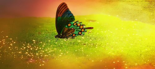 butterfly insect color