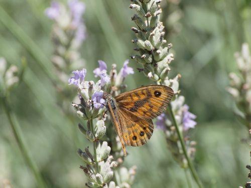 butterfly macro tiefenschärfe