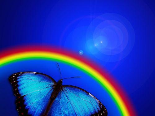 drugelis, vaivorykštė, šviesa, sąskaitą, atrodo, nuotaika, atmosfera, tapetai, fonas, trapumas, lengvumas, kontempliatyvas