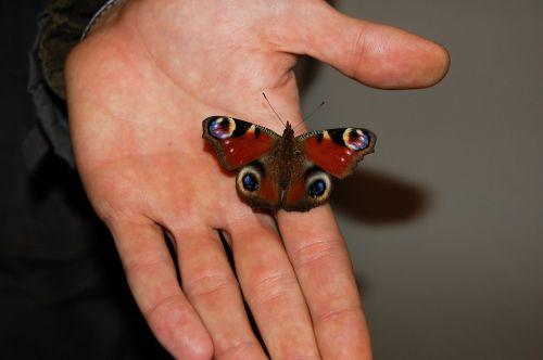 drugelis,gamta,skraidantys vabzdžiai,pastebėtas,taškeliai