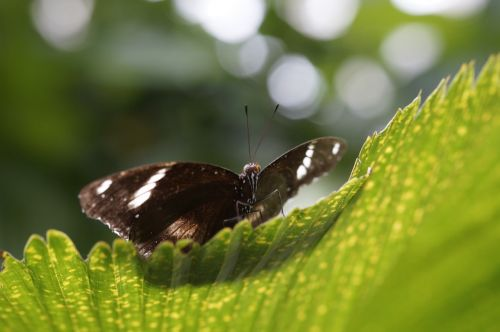 butterfly tropical exotic