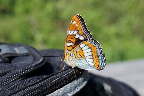 butterfly summer namekomye
