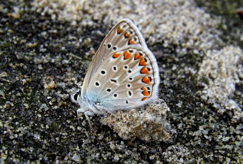 butterfly coloring sand