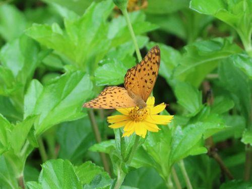 butterfly adopt honey flower