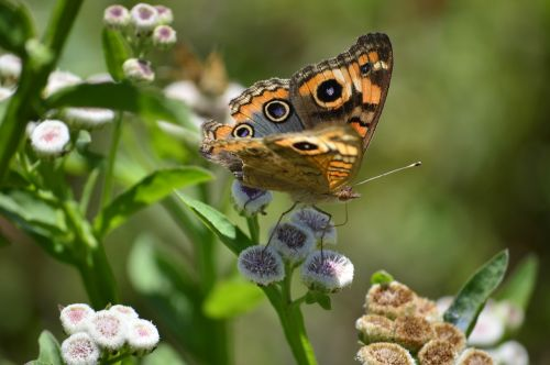 butterfly nature purity