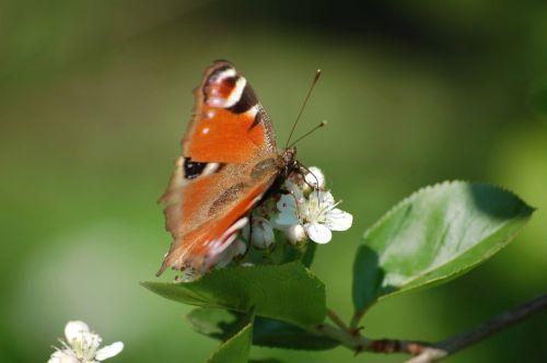 butterfly nature garden