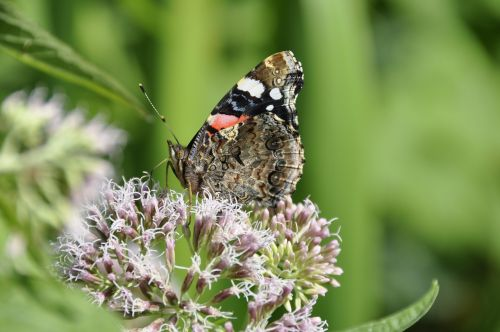 butterfly summer flower