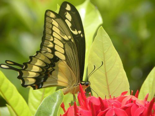 butterfly mariposa flor