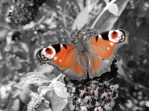 butterfly butterfly tree plant