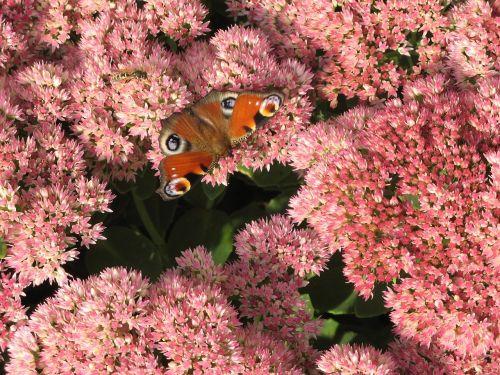 butterfly flowers summer