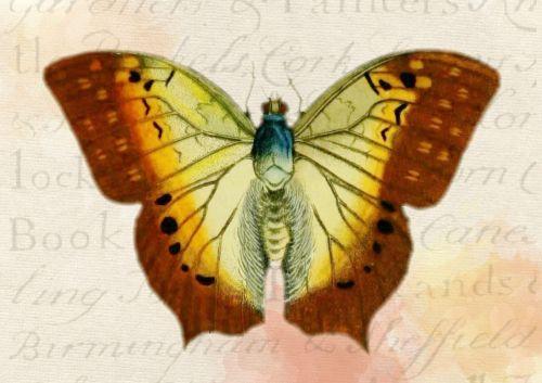 butterfly background vintage