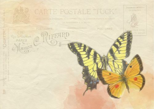 butterfly background post