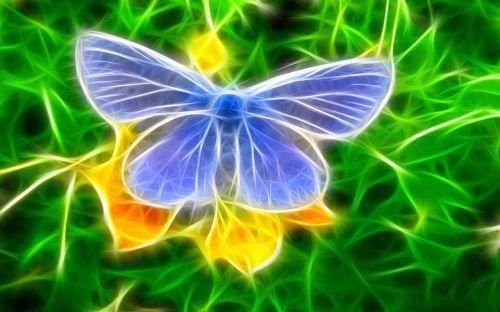 butterfly graffity wallpaper