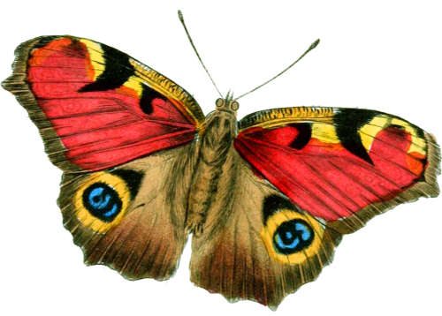 butterfly bright vintage